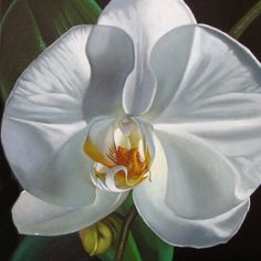 White Orchid, painting by artist M Collier