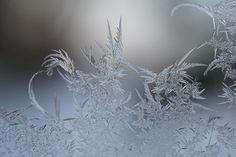 flora glacialis (photography by gisela farenholtz)