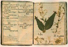 Un herbier est une collection de plantes séchées et pressées entre ...