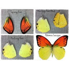 Vibrant Orange Real Butterfly Wing Earrings ($22) ❤ liked on Polyvore featuring jewelry, earrings, orange earrings, wing earrings, butterfly earrings, butterfly jewelry and butterfly wing earrings