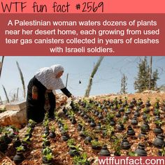 Palestinian woman waters plants in tear gas canisters -WTF funfacts