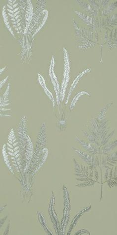 Woodland Ferns (W) by Sanderson Wallpapers | Wallpaper – FABRIC STUDIO STORE