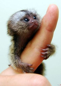 I love monkeys - this one is adorable!