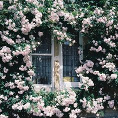 Romantic dream | I've just started doing gardening today. I… | Flickr - Photo Sharing!