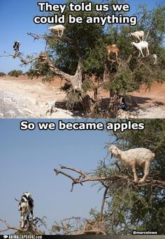@Lucinda Chapman...LOL sounds about the way goats think ...