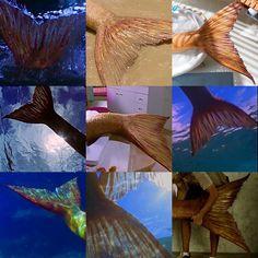 Realistic Mermaid Tails, Fin Fun Mermaid, Mermaid Art, Moon Pool, H2o Mermaids, Coconut Dream, Silicone Mermaid Tails, Water Aesthetic, Mermaid Images