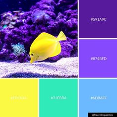 The vibrancy in this one though? Happy Wednesday Everyone! Purple Color Palettes, Colour Pallette, Colour Schemes, Color Patterns, Color Combos, Colours That Go Together, Underwater Fish, Color Balance, Colour Board