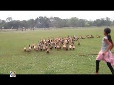 Rural girl back home in the evening with duck