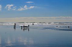 Dog Beaches Near Oceanside, CA
