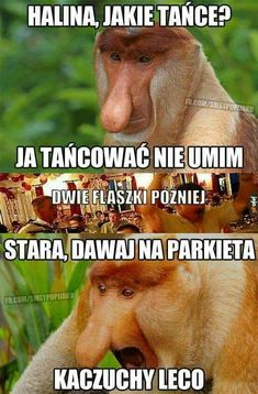Very Funny, Wtf Funny, Polish Memes, Cool, Haha, Humor, Animales, So Funny, Really Funny