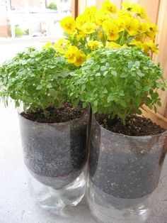 pop-bottle-planter,