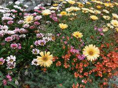 Ventnor Botanic Garden - Flip van den Elshout - Picasa Web Albums