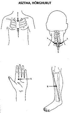 ábra Acupressure, Acupuncture, Health Fitness, Health, Fitness, Health And Fitness, Excercise