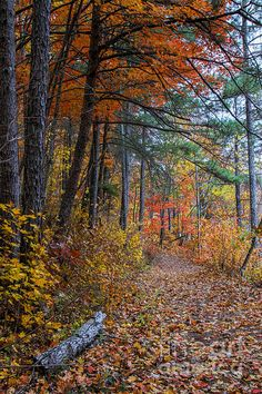 The glowing colors of the fall leaves provides breath taking scenery on an easy fall stroll around the upper lake.
