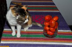 Title:  Cat And Tomatoes   Artist:  Diane Lent   Medium:  Photograph - Photography