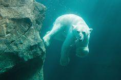 Der älteste Zoo der Welt liegt mitten in der kaiserlichen Sommerresidenz…