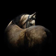 """Banner """"Pferd"""""""