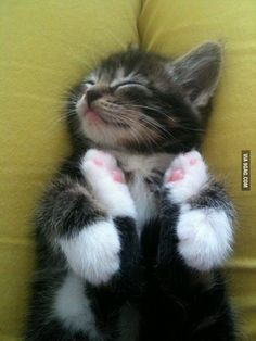 .Sleepy time for this cute kitten.
