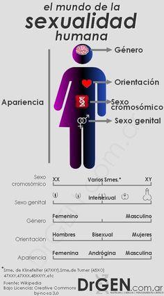 infografia sexualidad humana1 El mundo de la sexualidad humana y la disforia de género [Infografía]