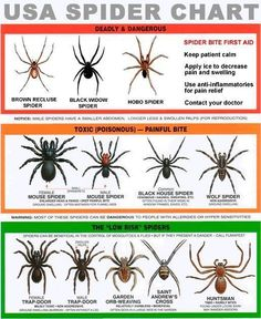 USA Spider Chart... Good to know