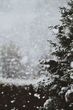 New wallpaper iphone winter christmas let it snow ideas Christmas Phone Wallpaper, Christmas Aesthetic Wallpaper, Christmas Wallpaper, Snow Wallpaper Iphone, Iphone Wallpapers, Whatsapp Wallpaper, Winter Trees, Winter Snow, Cozy Winter