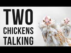 """The sound of two hens """"talking"""" to one another in their mysterious chicken language.  Free download of sound effect in the YouTube video description."""