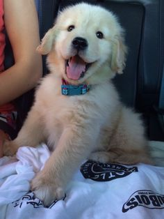 "Golden Retriever Puppy. So happy ~ "" We're going for a ride"""