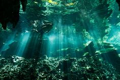 Yucatan's underwater caves, known as cenotes, in Quintana Roo, Mexico