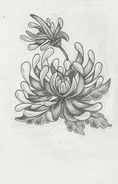 Google Image Result for http://th02.deviantart.net/fs70/PRE/f/2012/262/5/8/chrysanthemum_tattoo_design_by_mashamanya-d5fa4y0.jpg