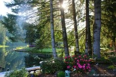 Looking out my lakefront the Morning of Sharon Lee's arrival at Fishhawk Lake  Come see what our slice of paradise is all about! via http://lakehomesatfishhawk.com/category/the-seasons