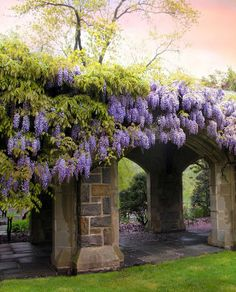 Spring wisteria by Jessica Jenney - Beautiful Landscapes, Beautiful Gardens, Beautiful Flowers, Beautiful Places, Wisteria Plant, Purple Wisteria, Wisteria Pruning, Flowering Creepers, Garden Gates