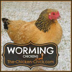 .Worming Chickens #BackyardChickens www.FreeHenHousePlans.net http://www.eFowl.com/?Click=32918