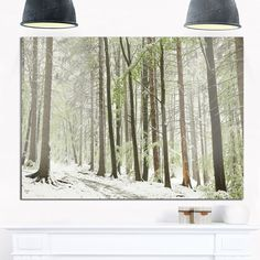 Spring Beech Forest Scenery - Landscape Photo Glossy Metal Wall Art