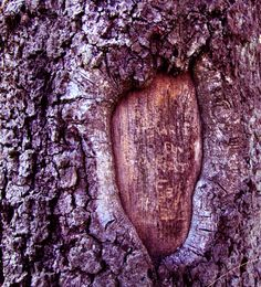Close-up Tree Bark