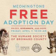 """""""Attention hoomans. You can now adopt us fur free thanks to our frands at @meowingtonsco ... but only on Furr-iday."""" - the Kittehs of the HSBC  . . . . . #cat #cast #catsofinstagram #cute #kittens #lol #funny #cutie #florida #miami #fortlauderdale #broward #love #Adopt #adoptdontshop #meow #foster #charity #nonprofit #humanesociety #hsbroward #compassion"""