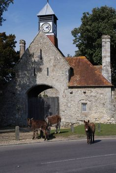Beaulieu Village in Hampshire - A picturesque village where donkeys and ponies wander down its quaint high street, graced with traditional shops, an inn, teashop and deli. Hampshire England, Hotels, New Forest, Sweet Memories, Great Britain, Countryside, Wander, Bbc, Places Ive Been