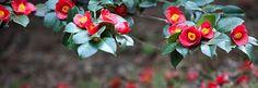 동백꽃 동박새에 대한 이미지 검색결과