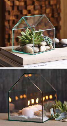 Greenhouse Terrarium - I need these when we get our own place with the cats