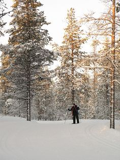 Cross-Country skiing, Lapland, Finland.  Photo: vicky.inglis, via Flickr