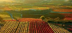 Image result for pictures of autumn landscape in Rioja spain