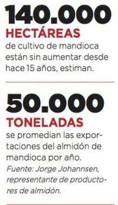 Buscan incrementar el cultivo de mandioca y competir con Tailandia ...