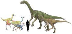 1.Ornithomimus velox 2.Struthiosaurus altus 3.Pelecanimimus polydon 4.Deinocheirus mirificus 5.Gallimimus bullatus Prehistoric Creatures, Science And Nature, Natural History, Aliens, Biology, Animals And Pets, Evolution, Moose Art, Paleo