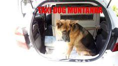 TAXI DOG MONTANHA TRANSPORTE DE ANIMAIS NO RIO DE JANEIRO: SANTA TERESA para DOGS PRIME em ITABORAÍ