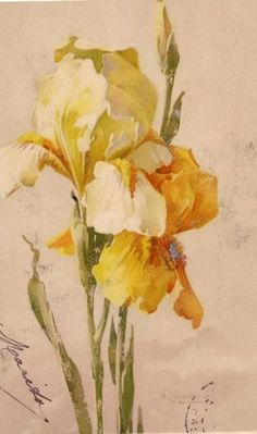 """Floral painting by Catherine Klein, vintage Victorian postcard. Klein,"""" her trademark signature, stands for Catharina Klein. She is also referred to as Catherine Klein, but that's not a name she ever used herself Botanical Drawings, Botanical Illustration, Botanical Prints, Illustration Art, Catherine Klein, Victorian Flowers, Vintage Flowers, Vintage Floral, Vintage Art"""