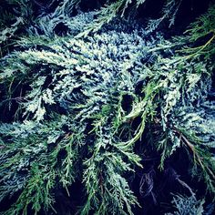 Winter time Winter Time, Trees, Natural, Flowers, Plants, Pictures, Photos, Florals, Photo Illustration