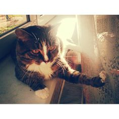 What a #sunnyday today! #cat #cats #markus #markuscat #weather