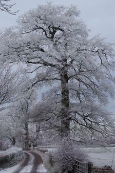 My favourite tree winter 2013