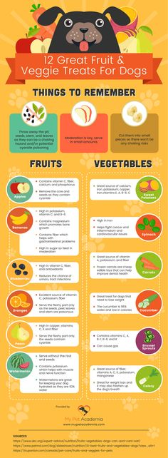 This infographic will help you choose some healthy fruits & veggie treats for your dog. Fruits For Dogs, Fruits And Veggies, Healthy Fruits, Diy Dog Treats, Homemade Dog Treats, Puppy Treats, Watermelon For Dogs, Vitamin C Foods, Teacup Puppies