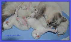 Holly with her babies, so sweet. Angel Eyes, Clip Art, Babies, Cats, Sweet, Animals, Candy, Babys, Gatos