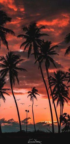 Mirada de Mujer is part of Summer wallpaper Pics are not mine - Strand Wallpaper, Beach Wallpaper, Summer Wallpaper, Tree Wallpaper, Iphone Background Wallpaper, Nature Wallpaper, Aesthetic Backgrounds, Aesthetic Iphone Wallpaper, Aesthetic Wallpapers